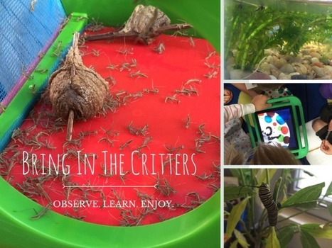 4 Great Reasons to Bring Nature Into Your Classroom - FRACTUS LEARNING | Educated | Scoop.it