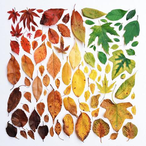 Por qué las hojas son naranjas en otoño | Recull de recursos TiC de Ciències de la Naturalesa | Scoop.it