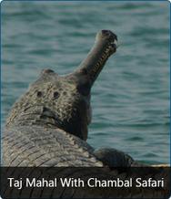 Overnight Taj Mahal Tour | Business India Travels | Scoop.it