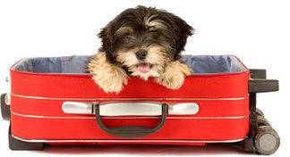 Cani, gatti e traslochi: tra normali preccupazioni e pura follia | Benessere animale | Scoop.it