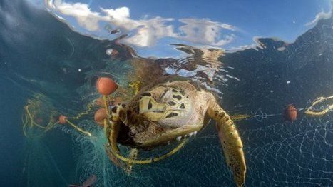 Victimes de braconnage ou de pollution, les tortues sont les témoins de l'état de nos océans | Toxique, soyons vigilant ! | Scoop.it