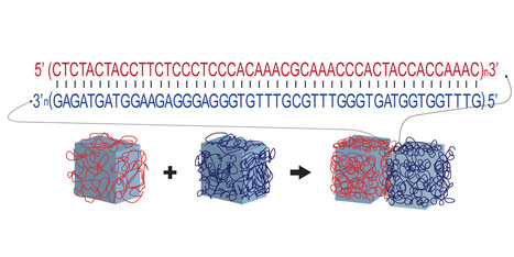 DNA-directed self-assembly of shape-controlled hydrogels | SynBioFromLeukipposInstitute | Scoop.it