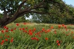 Adventices en agriculture : pourquoi sont elles là ? | Agriculture Nouvelle | Fongicides et herbicides pour gazon | Scoop.it