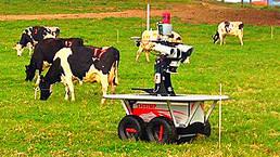 El robot que calma a las vacas lecheras   Mundo agropecuario   Scoop.it