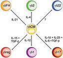 Mechanisms underlying lineage commitment and plasticity of human gamma-delta T cells | Immunology for University Students | Scoop.it