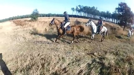 Endurance (Vidéo) : En immersion à la Plaine du Séqué - Equidia Life | Cheval et sport | Scoop.it
