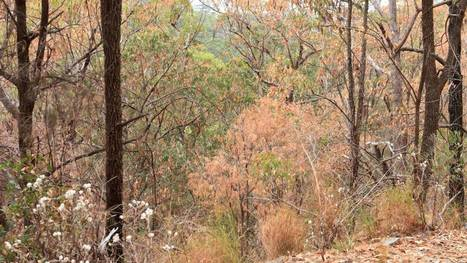 Mountains' early autumn colours a mystery - Camden Haven Courier | Mountaineering | Scoop.it