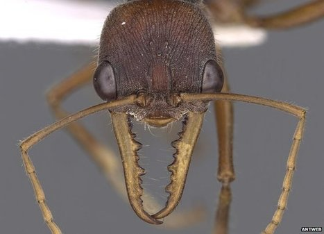 Mission begins to view ants in 3D | Social Foraging | Scoop.it