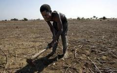 Earth may be too hot for humans by 2300: study | Global Warming | Scoop.it