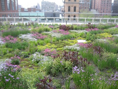 NYU's sustainable landscaping efforts on view for all | GarryRogers Biosphere News | Scoop.it
