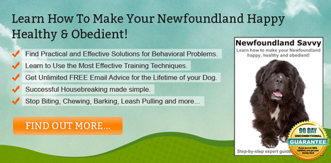 Newfoundland Training Techniques for Success   Great view of life   Scoop.it