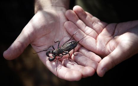 Tarantulas, Killer Caterpillars, and the Most Misunderstood Bugs | CALS in the News | Scoop.it