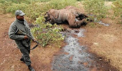 The challenge of protecting elephants | IOL | GarryRogers Biosphere News | Scoop.it
