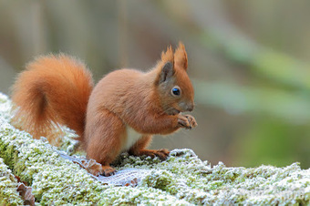 Stuart Shore - Wight Wildlife Photography: A new year and back to the Squirrels | Just photography | Scoop.it