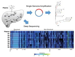 High resolution sequencing of hepatitis C virus reveals limited intra-hepatic compartmentalization in end stage liver disease | Hepatitis C New Drugs Review | Scoop.it