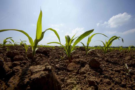 Sénégal : miser sur la technologie à grande échelle dans l'agriculture | Questions de développement ... | Scoop.it