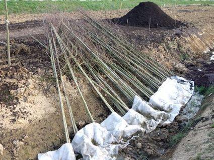 La mise en jauge avant plantation | planter des bulbes | Scoop.it