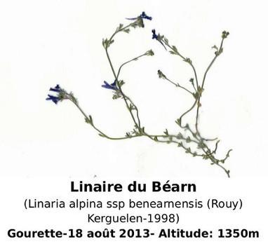 La Linaire du Béarn | Nouvelles Flore | Scoop.it