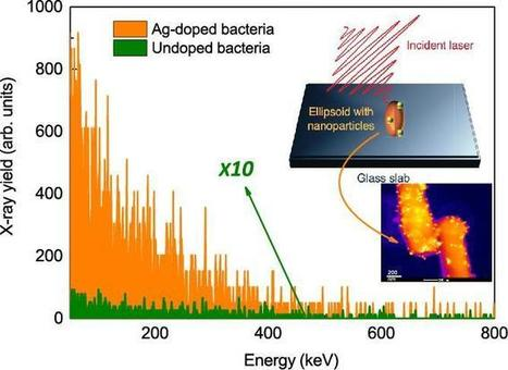 Nanospiked bacteria are the brightest hard X-ray emitters discovered, 10,000 fold amplification effect | Amazing Science | Scoop.it
