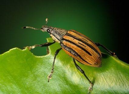 Des insectes au menu des animaux ? C'est l'avenir, selon Ynsect - Futura Sciences | Agro-News | Scoop.it