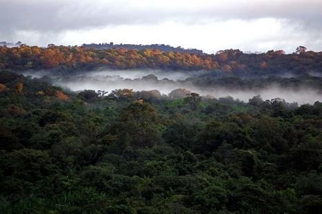 11 choses à savoir sur la Guyane | La Guyane | Scoop.it