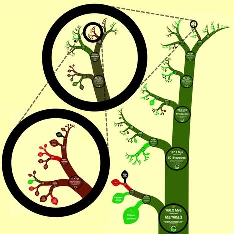 L'arbre de l'évolution à l'heure numérique | #dataviz #openscience | #Réseaux,#Data,#Visual data,#Open Data, #Sociabilités, #Savoirs, #Travail, #Utopies,  #Social Change,#Innovations, #commons, #Fab Lab, #Crowdsourcing, #Transhumanisme,#Robotisation,#Objets connectés,#E Santé | Scoop.it