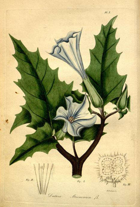 American Medical Botany - published 1817 | Drawing to Learn. Drawing to Share. | Scoop.it