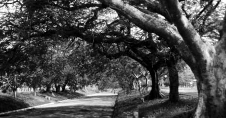 Mostra reúne fotos do cotidiano de Santa Bárbara em preto e branco - Universidade Metodista de Piracicaba (Unimep)   Instituições Metodistas de Educação   Scoop.it