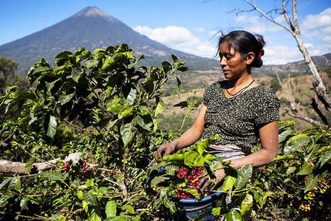 'Women's Coffee' Creates Opportunity, So Why Hasn't It Taken Off Yet? | Coffee News | Scoop.it