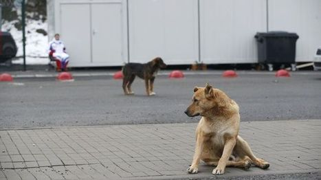 Sochi officials order stray dogs killed ahead of Olympics - Fox News | Just Tell Us about | Scoop.it