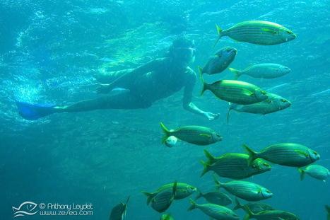 Snorkeling, la plongée pour tous ! - Le Blog de la Plongée Bio | Biologie marine | Scoop.it