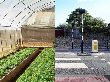 How we can eat our landscapes | Permaculture, Homesteading & Green Technology | Scoop.it