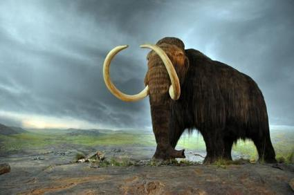 CRISPR-CAS editing brings cloning of woolly mammoth one step closer to reality | WWWBiology | Scoop.it