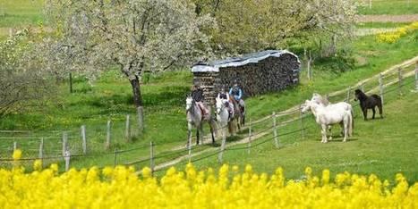 Pas d'OGM en Wallonie, la région bénéficie d'une exemption de la ... - lalibre.be | Nous avons besoin des abeilles | Scoop.it