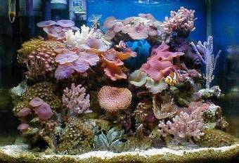 10 Easy Marine Aquarium Set Up Steps | Pets | Scoop.it