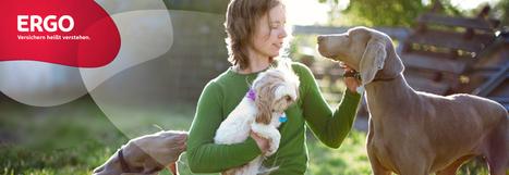 Hundehalter-Haftpflichtversicherung | Versicherungen | Scoop.it