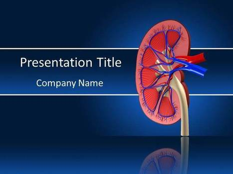 PowerPoint Template Represent the Importance of Kidney   Templatesforpowerpoint   Scoop.it