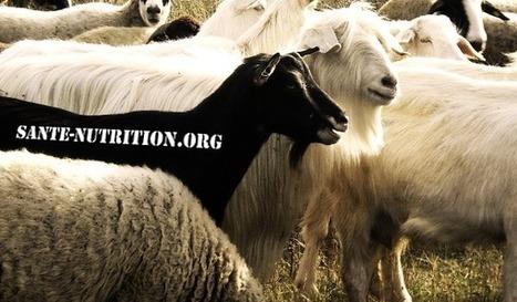 Boycottons Santé-Nutrition.org, le site-poubelle qui vit du piratage | Dur A Avaler | Greenwashing | Scoop.it