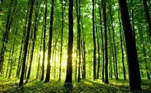 Daily Briefing Regrowth of forests stems global warming | GarryRogers NatCon News | Scoop.it