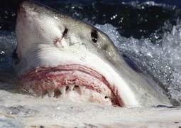 Corée du Sud : un dispositif anti-requins à énergie solaire | 694028 | Scoop.it
