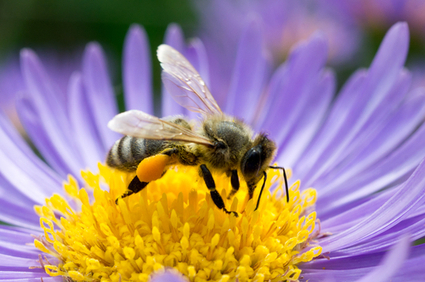 Bees Being Trained to Hunt Land Mines [VIDEO] | EduTech Chat | Scoop.it