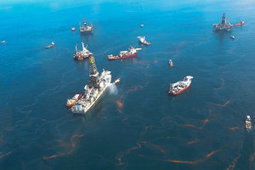 Mechanism of crude oil heart toxicity on fish revealed from oil spill research | Sustainability Science | Scoop.it