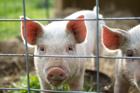 What's Humane? Core Standards for Animal Welfare | Knowledge Dump | Scoop.it