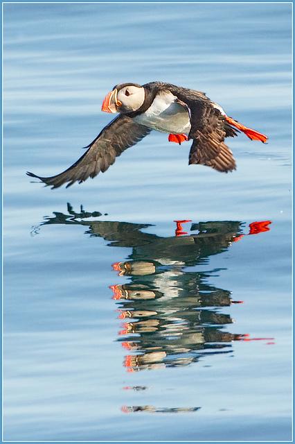 Amazing nature & wildlife photography - Hennie van Heerden | Everything Photographic | Scoop.it