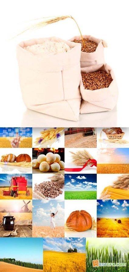 Wheat & Bread 25xJPG | DesignFeed | Scoop.it