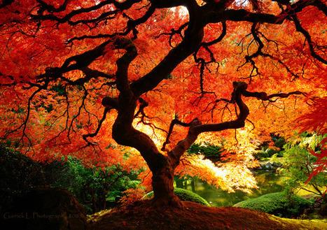 Tree Photographs | Incredible Snaps | #TRIC para los de LETRAS | Scoop.it