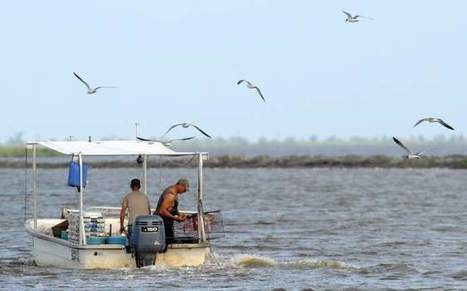 Coastal restoration underway near Myrtle Grove in Plaquemines Parish - The Advocate | Fish Habitat | Scoop.it