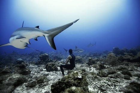 Freediving with sharks in Roatan, Honduras – in pictures | Whats New | Scoop.it
