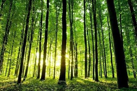 Forêts françaises : hausse de l'activité, stabilité des prix | anoribois | Scoop.it