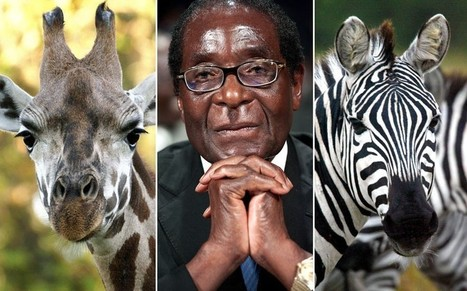 Mugabe buses in African wildlife for UN summit 'propaganda' | Wildlife Trafficking: Who Does it? Allows it? | Scoop.it